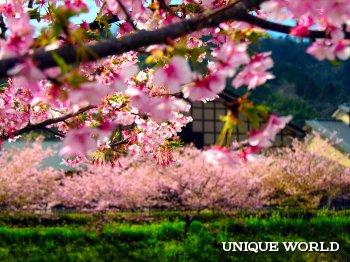 Чем манит туристов Япония?