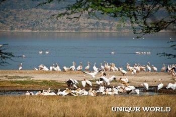 Национальный парк в Кении
