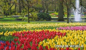Праздник красок и тюльпанов в весеннем парке Кейкенхоф